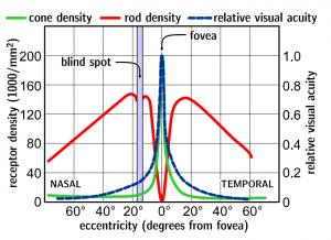 fovea grafiek